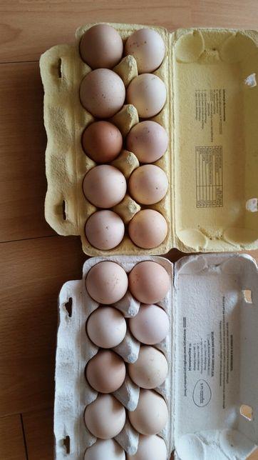 Jaja wiejskie sprzedam