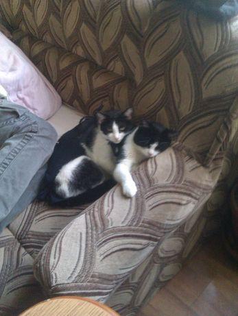 zaginoł czarno biały kot