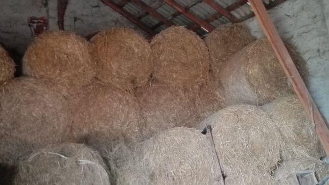 Sprzedam słomę ze stodoły 120 sztuk