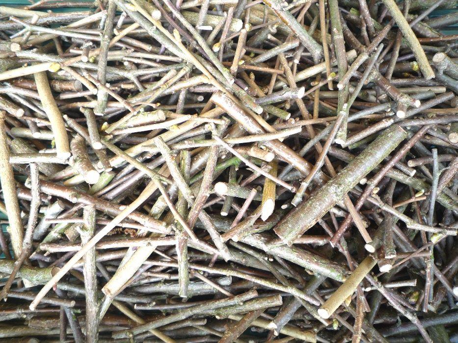 Gałązki pędy leszczyny dla gryzoni gryzaki 1 kilogram