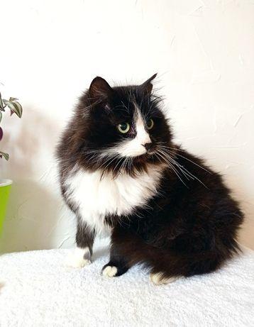 Нежный кот ищет дом, пушист, молод, здоров и полон сил
