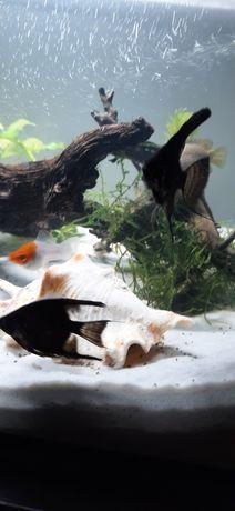 Zamienie rybki na rybki