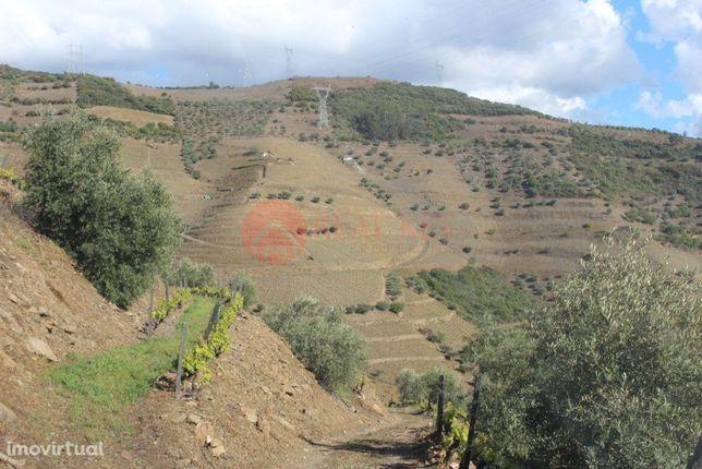 Quinta no douro para produção vinho Letra A e B