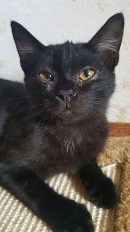 Котенок 5 месяцев