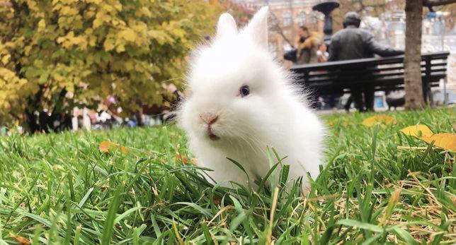 Няшный Пасхальный Кролик