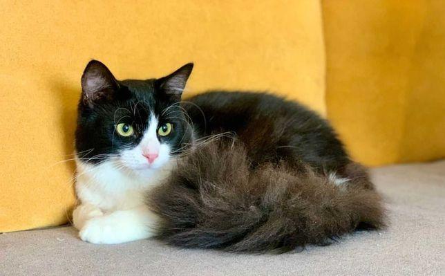 віддам кота, 9 місяців, ніжний, контактний, кастрований