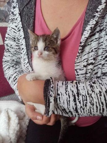 Cudowna malutka kotka szuka troskliwego domu