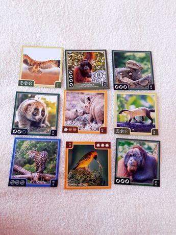 Карточки Звірокуб зверокую животные