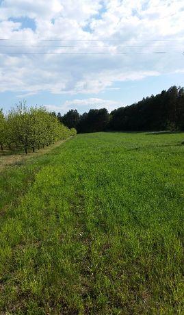 Kompleks działek rolno-leśnych 4,92 ha
