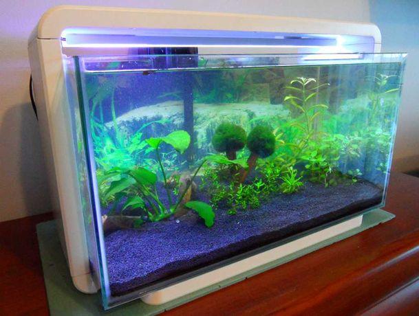 Akwarium 25 litrów oświetlenie LED + filtr Rośliny Możliwa zamiana