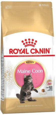 Karma Royal Canin FBN Kitten Maine Coon 36 2 kg