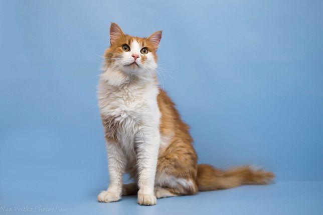 Отдам в хорошие руки идеального молодого кота Зефира.