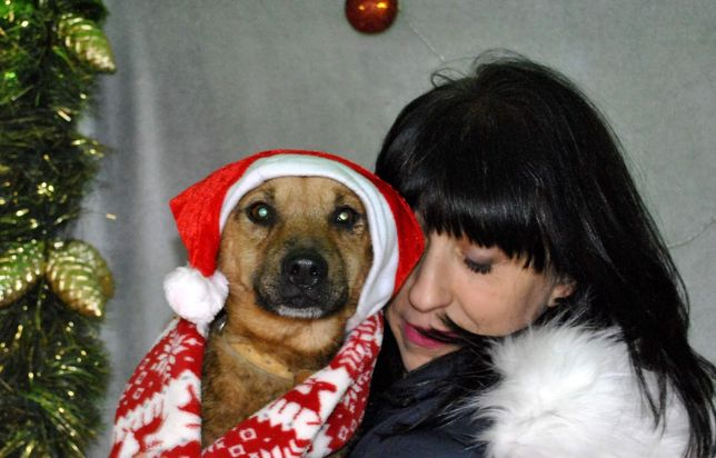 Piesek wykastrowany zdrowy zaszczepiony do adopcji średni psiak