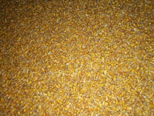 sprzedam kukurydze sucha