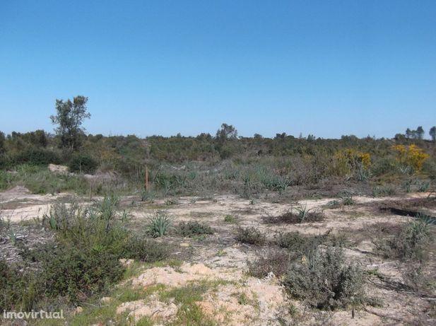 Terreno rústico no Pinhal das Formas com 908m2 Quinta do Anjo -10.000€