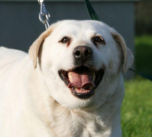 przyjazny psi senior czeka na swój dom