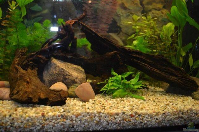 Żwir rzeczny do akwarium 8-16 mm 5 kg - podłoże dla każdego biotopu