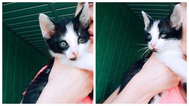 Urocze Kociaki Adopcje
