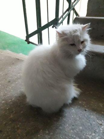 Потерялась белая, пушистая кошка с ошейником! Запорожье, Шевченковский