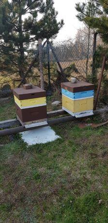 Pszczoły, rodziny pszczele