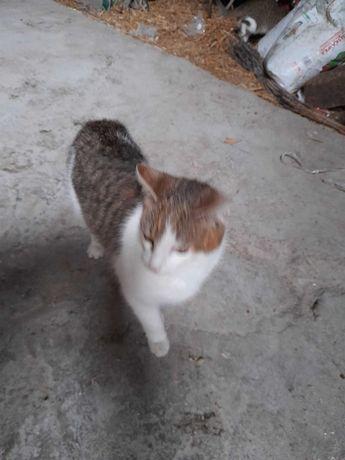 Koty kotki za darmo