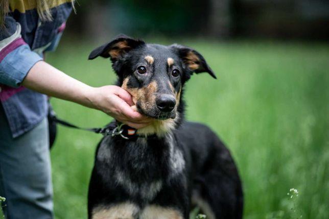 віддам собаку, дівчинка, стерилізована, привчена до вигулу