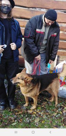 Reks kochany poczciwy pies szuka domku