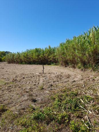 Vendo pequeno terreno agrícola em Arneiro das Milhariças