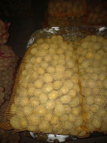 Ziemniaki wielkość sadzeniaka DENAR, Wineta GALA