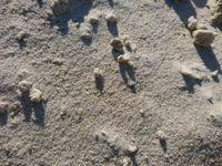 Jasny piach piasek do piaskownicy z Atestem NIZP-PZH