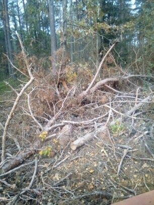 Drzewo opałowe po ścince