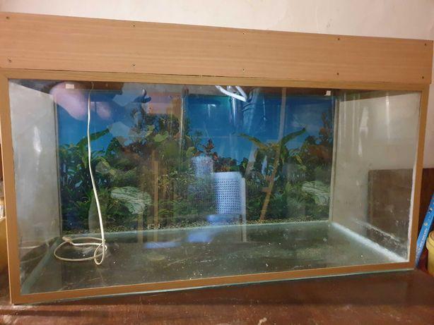 Aquarios 200 litros