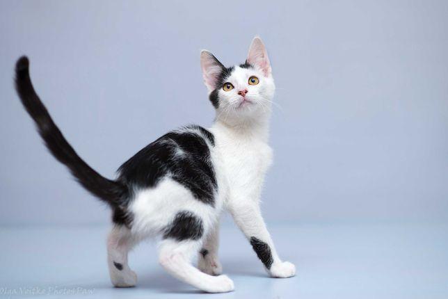 Отдам в хорошие руки котенка мальчика Шема.