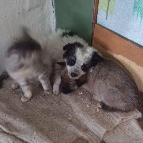 Продам щенков и котят