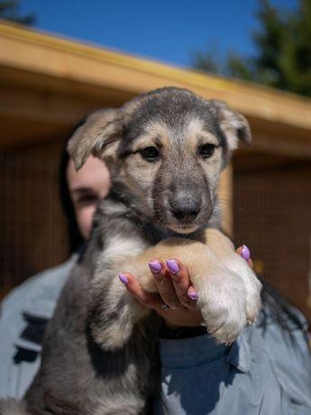Щенок Сальма 3 месяца,щеня, собака, собачка,пёс, песик