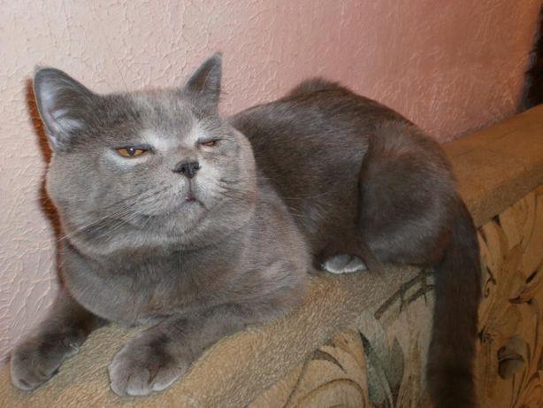 Кіт на вязку прямовухий