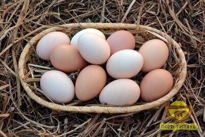 Домашні яйця Микуличі