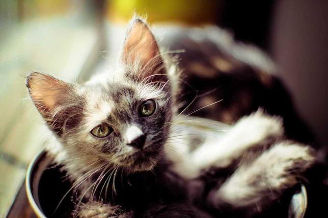 Отдам котят,3 месяца