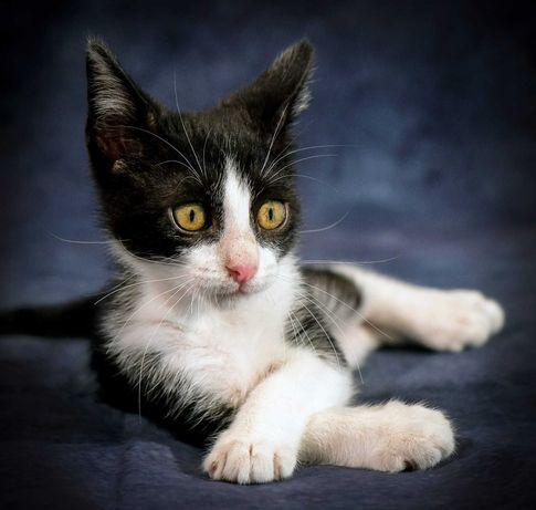 dá-se gatinho para adoção responsavel