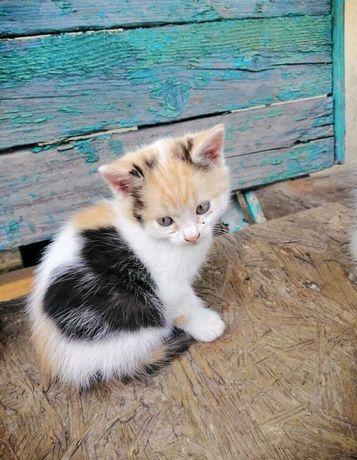 Котенок девочка 2 мес с сердечком