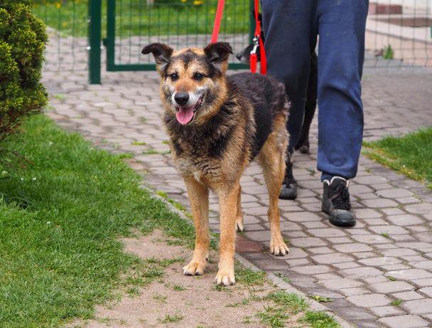 Hektor - uwielbia kontakt z człowiekiem, idealny pies rodzinny