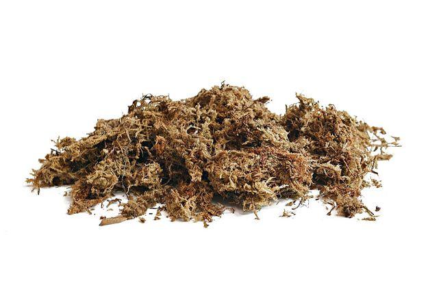 Sphagnum Moss - 100g - ANIMALE