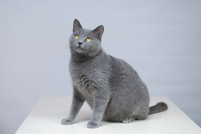 Віддам в добрі руки молоду кішечку Грейс.