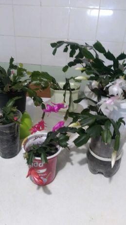 Цветы комнатные разные