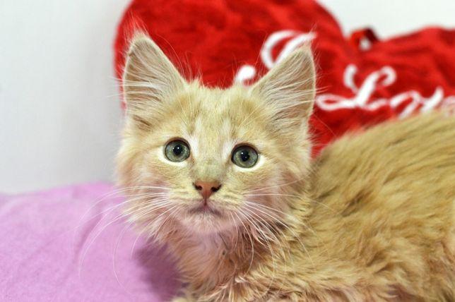 Ласковое и теплое солнышко, красивый котенок Патрик (3 мес.)