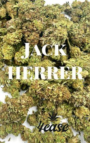 Susz konopny CBD Jack Herer 1 kg Super Okazja!