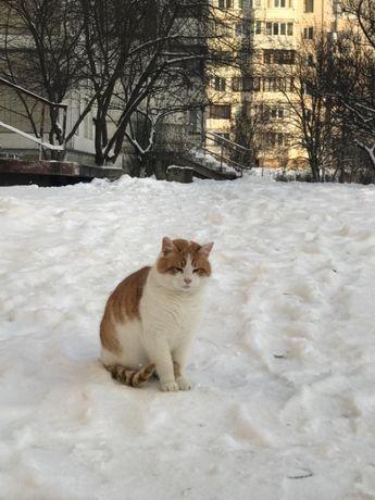 Рыжий с белым кот в добрые руки