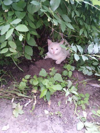 Пропал белый кот с разными глазами