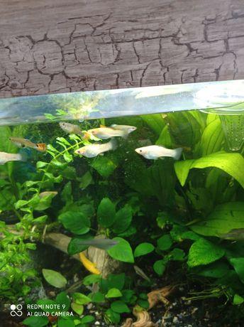Акваріумні рибки,криветки