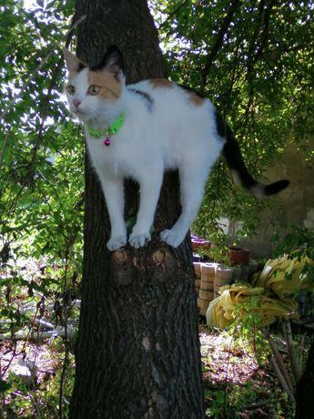 Zaginela kocica z zieloną obroża nagroda za kota